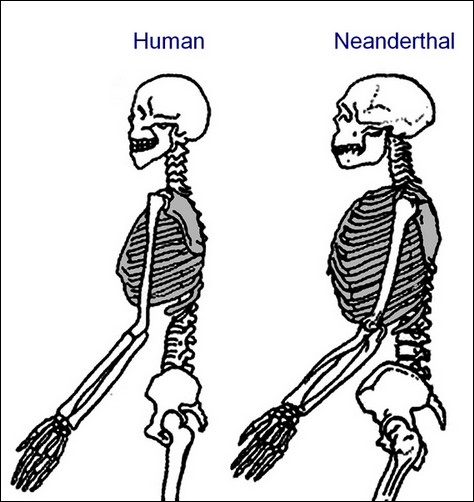 the real neanderthals | them+us: danny vendramini, Skeleton